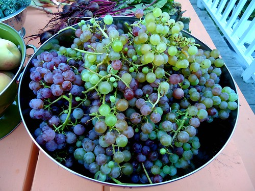 some of the grapes