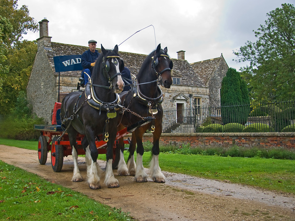 Shire horses, Prince and Monty. Delivering barrels at Avebury Manor..