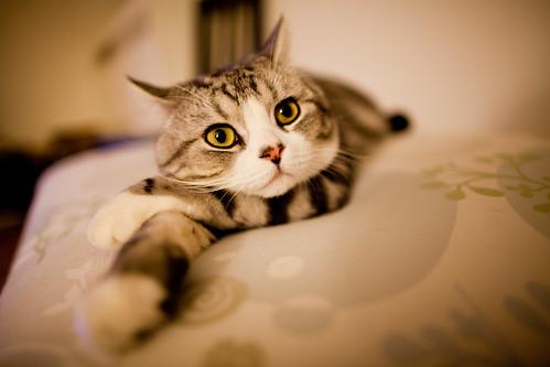 [フリー画像] 動物, 哺乳類, 猫・ネコ, 201109141100