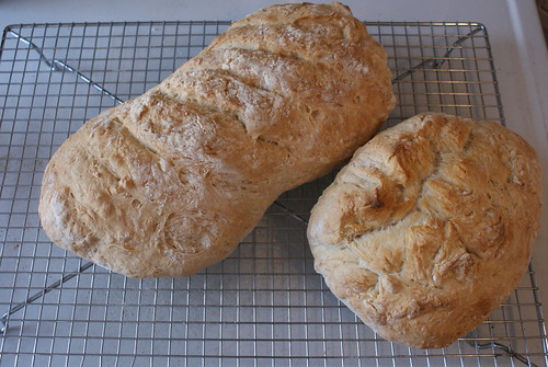 5 Minute No-Knead Bread