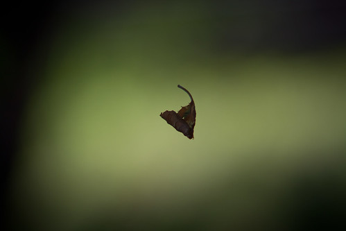 Hovering Leaf