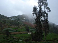 Green Valley (rabidash*) Tags: new travel winter cloud india holiday mountains colour love nature beautiful beauty look wow wonderful landscape photography idea amazing cool nice perfect flickr day colours photographer village shot display time sweet awesome funtime country great super move location more creation dash delight future excellent click lovely interest rabi ooty rabindra supershot rabidash photography rkdash photocontesttnc12 rabidashphotography naturearttnc12