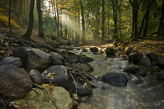 Enchanted Forest (Slawek Staszczuk) Tags: wood autumn trees light mist nature water misty forest woodland river landscape stream stones poland polska boulders brook shaft gdynia potok pomorze forestscape marysspring rdomarii trjmiejskiparkkrajobrazowy tricitylandscapepark