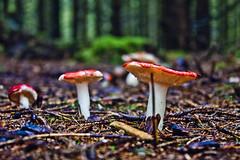 Skog5 (Lyingfigure) Tags: school mushroom norway forest norge high folk norwegian h fungus skog sopp øyvind jæren holmgren norsk fhs folkehøgskole folkehøgskule folkehøyskole øyvindh