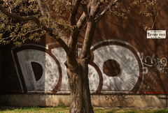 Tavasz u. / Spring str. (sonofsteppe) Tags: life street city shadow urban brown detail building tree art sign wall architecture concrete photography graffiti daylight spring still mural scenery hungary mood branch exterior outdoor budapest atmosphere nobody scene architectural tagged explore environment series 60mm visual exploration streetname frontview fragment bough buda streetplate milieu wallscape scrawled sonofsteppe pusztafia streetplatesofbudapest urbanlifeoftrees tavaszutca