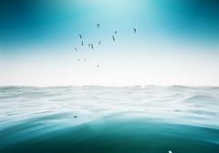(Luis Hernandez - D2k6.es) Tags: barcelona light sea summer sun bird sol beach water birds canon mar playa pajaros bella s90 acuatica resistant gettyiberiasummer