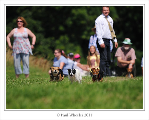 Terrier Racing - They
