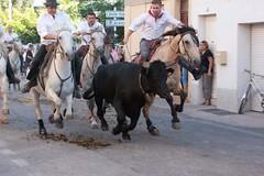 Abrivados (kat's here) Tags: horse caballos bulls toros bandido chevaux abrivado taureaux perols gardians