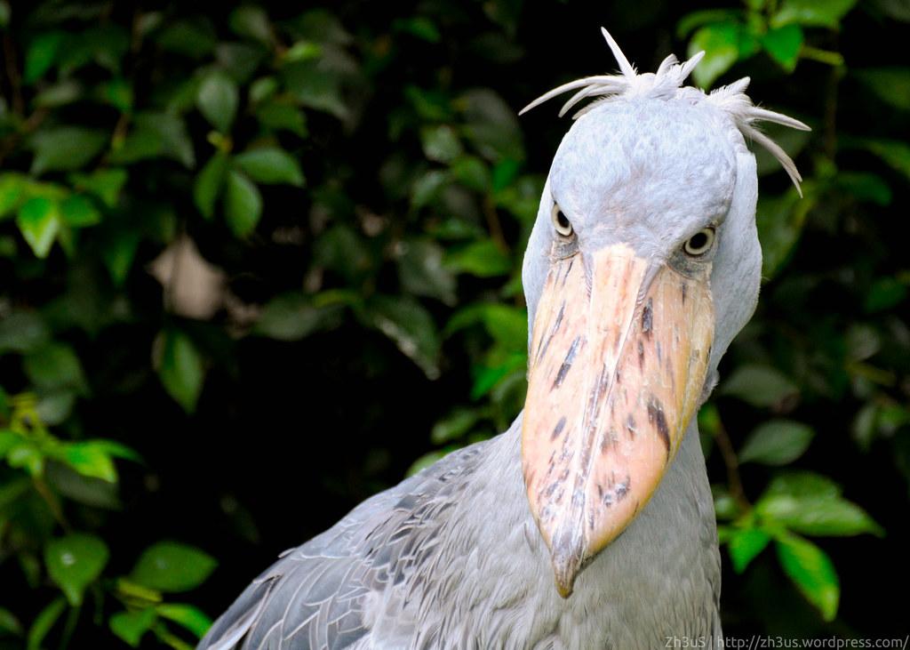 Jurong Birdpark (36 of 89)