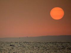 Delfn disfrutando de la puesta de Sol (KomodorO // Paco LopeH) Tags: africa sea sun sol atardecer mar mediterraneo dolphin delfin afrique