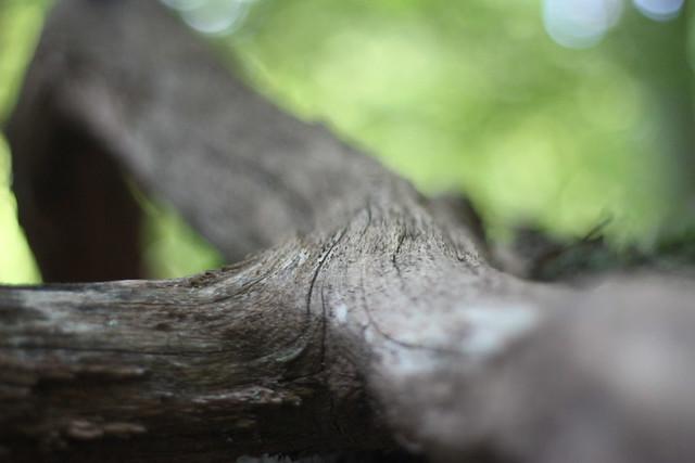 branch {three}