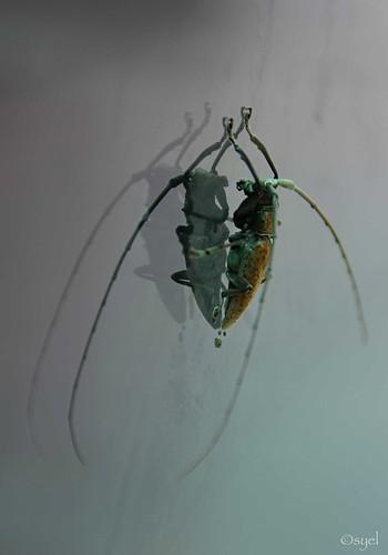 beetle poo