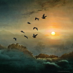 Eight Flying Doves (h.koppdelaney) Tags: life sky sun colour art birds clouds digital photoshop death hope gold flying peace venus friendship transformation symbol spirit miracle amor pigeon dove magic flight picture wolken philosophy frieden eros soul imagination metaphor et sonne psyche symbolism psychology archetype transcendence tauben flug idream august2011 panoramafotogrfico phantasmata koppdelaney truthandillusion morningway hallglorymorningwaysep2011