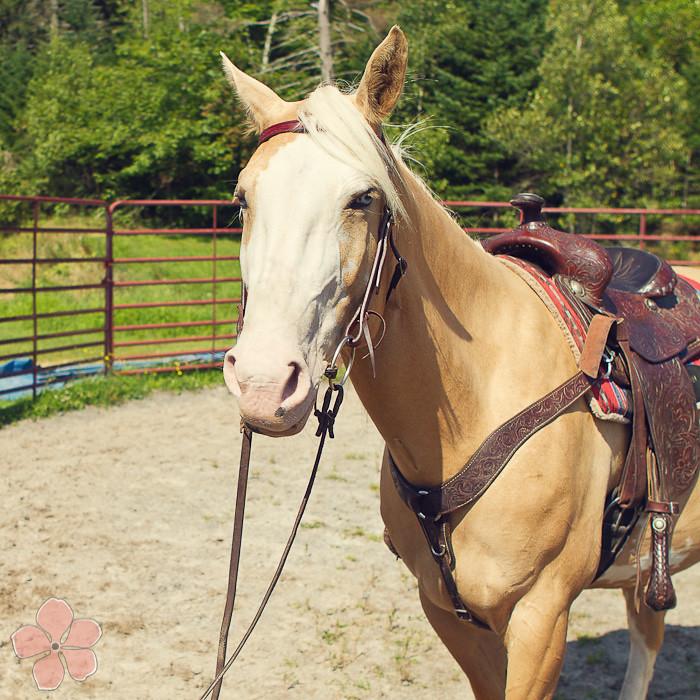 Halifax NS Wedding Portrait Horse Equine photography - Splash & Donna - Nicole Payzant -  (19 of 26)