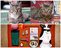 Lady Pickles & Mr. Toast Triptych (J Trav) Tags: atlanta cats georgia persona triptych whatsinyourbag catlanta theitemswecarry canon5dmarkii showusthecontentsofyourbag catpersona