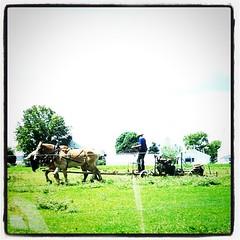 Amish arando la tierra