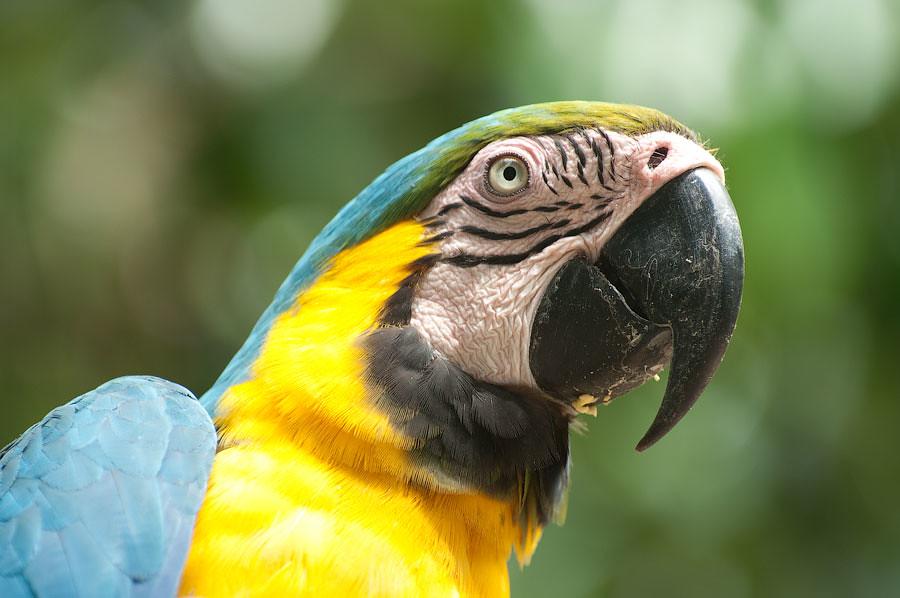 Попугай Ара. © Kartzon Dream - авторские путешествия, авторские туры в Перу, тревел видео, фототуры