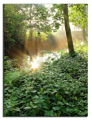 Sunrays & nettles (H-L-Andersen) Tags: water creek photoshop river denmark olympus ps  dk nettles sunrays danmark e30 topaz sindal landoflight brndenlde cs5 photoscape hlandersen uggerby nlder