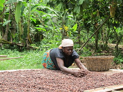IMG_8130 (MarsSustainability) Tags: mars germany farmers chocolate visit ghana cocoa utz certified