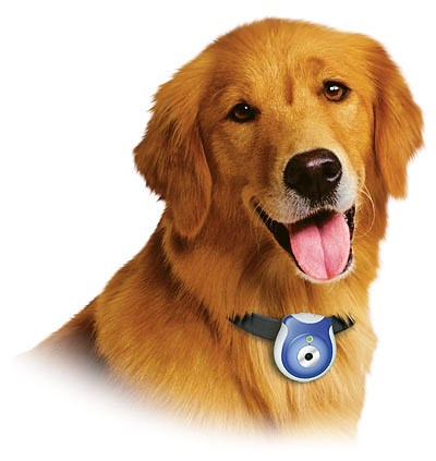 Get Rid of Your Dog's UTI With Natural Remedies For Dogs