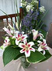 Lilium 'Nymph' in an arrangement