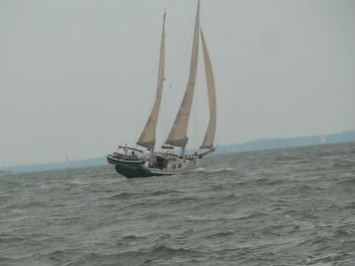 maryland sailboats longboats longboatraces