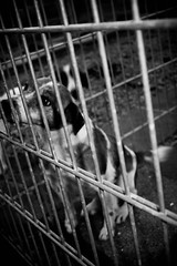 I want out.. (Failgirl) Tags: dog sadness sad terrier help lockedup needhelp