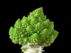Romanesco Broccoli (Mark Watson (kalimistuk)) Tags: food green vegetables lumix vegetable panasonic g1 fractal fractals dmc romanescobroccoli romancauliflower