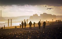 Late Summer Evening - Brighton Beach (Alan MacKenzie) Tags: sea people seagulls beach birds silhouette sussex evening coast brighton hove gulls shoreham shorehampowerstation alanmackenzie