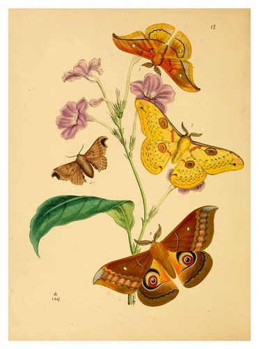 005-The cabinet of oriental entomology…1848- John Obadiah Westwood