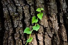 [Free Image] Nature / Landscape, Trees, Leaf, 201109022300