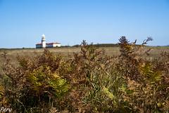 Al fondo, el faro (Perurena) Tags: lighthouse faro island herb pontevedra vegetacin hierba riasbajas riadepontevedra isladeons onsisland islasatlanticas galicia parquenaturalislasatlanticasdegalicia