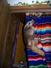 Ori curtain climbing