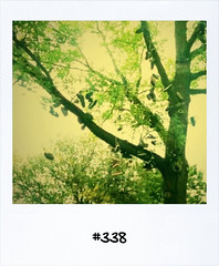 "#Dailypolaroid of 30-8-11 #fb #338 • <a style=""font-size:0.8em;"" href=""http://www.flickr.com/photos/47939785@N05/6102663999/"" target=""_blank"">View on Flickr</a>"