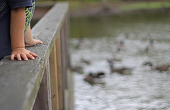Watching the ducks. (Tricia Laing) Tags: water fence hands ducks grandson fencefriday