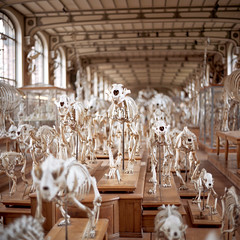 Forces of the Immortal (kenny ip) Tags: paris 120 6x6 film museum mediumformat kodak bokeh bones skeletons portra stampede wideopen portra400 norita norita66 80mmf2 noritar galeriedepalontologieetdanatomiecompare kennyip