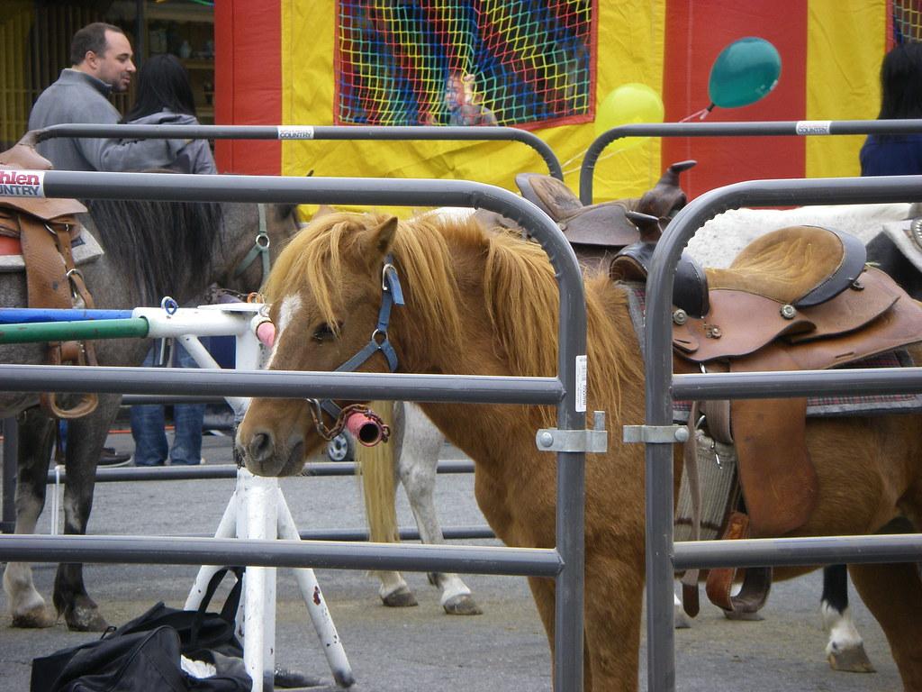Pony Ride Employee