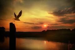 ~~~ following the sun ~~~ (jmb_germany) Tags: newvision colorphotoaward bestcapturesaoi jmbgermany elitegalleryaoi mygearandme mygeara
