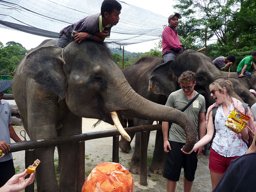 Kuala Gandah Elephant Sanctuary - happy tourists