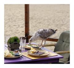 one price cleaners (Hindrik S) Tags: scheveningen terras food clean bird gull seagull iten terrace cleaning tamron α300 sonyalpha sony nederland alpha300 a300 beach strand table chair leftover restje kliekje tamronspaf1750mmf28xrdiiildasphericalif tamron1750 cpf sonyphotographing amount