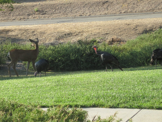 Deer and turkeys