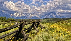 On Buffalo Fork Ridge - explore (Marvin Bredel) Tags: mountain fence landscape nationalpark bravo explore wildflowers wyoming tetons marvin jacksonhole grandtetonnationalpark muleears buffaloforkridge dirtcheapphototours bredel marvinbredel dcptjuly2011