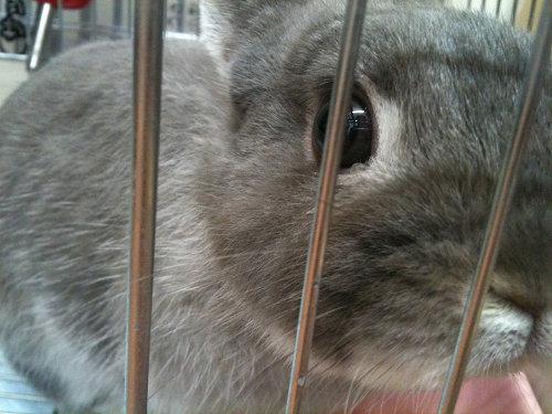 うさぎ専門店『CuteRabbit』@田原本町-16