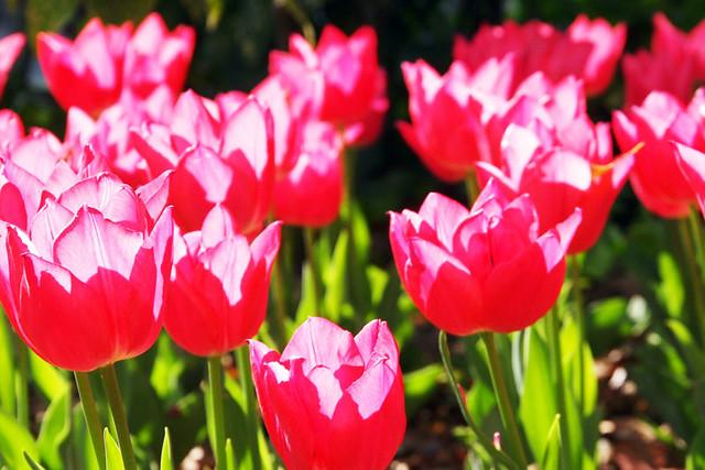 110417_153316_横浜_花と緑のスプリングフェア2011