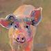 Pretty piggy!! Vote for Traci To bring home the bacon!!