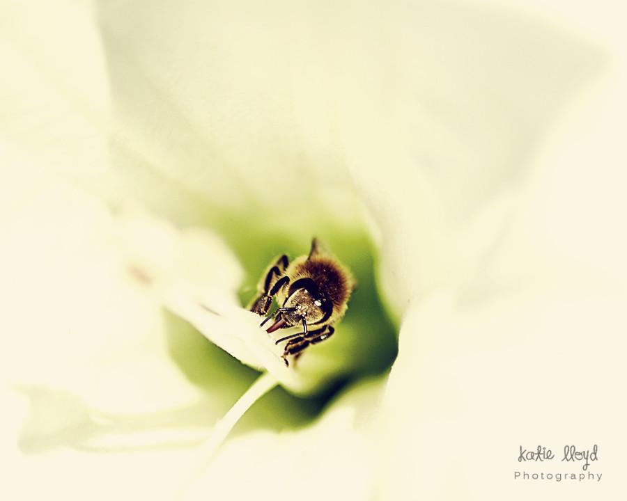 Bee---spring-edit