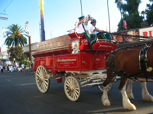 Clydesdales with wagon