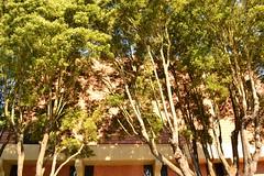 Bushy and Bright (Robert Ogilvie) Tags: foundinsf gwsf treesontuesday