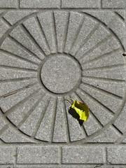 Leaf (historygradguy (jobhunting)) Tags: ny newyork stone circle leaf pavement saratoga upstate saratogasprings round hero winner hudsonvalley capitolregion herowinner