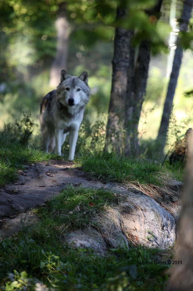 The World S Best Photos Of Parcomega And Timberwolves Flickr